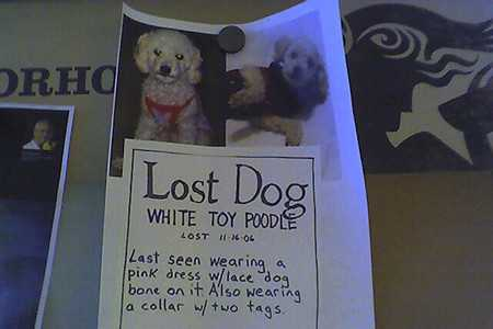 finding lost pets-2