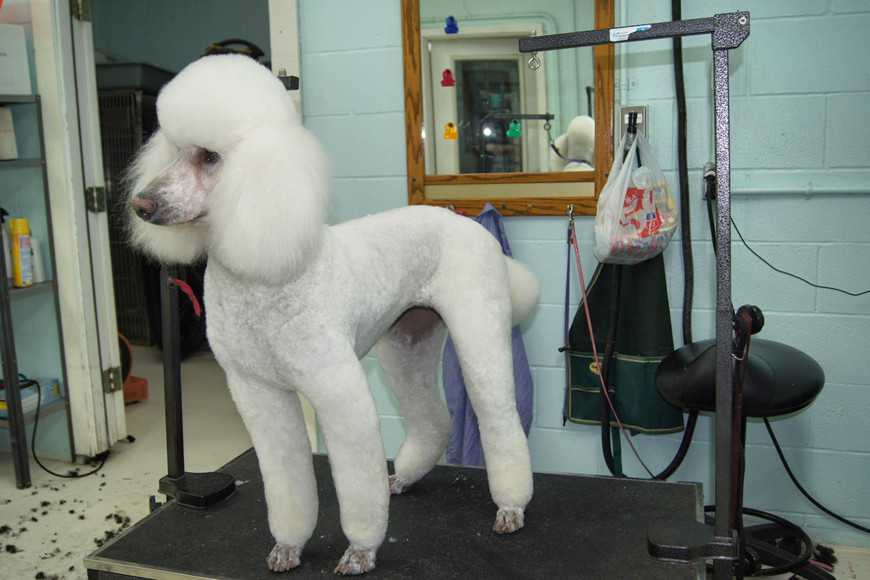 bad owners-groomer-4