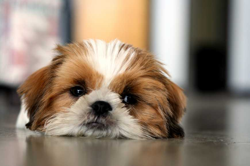 dealing with pets' vomiting and diarrhea-2