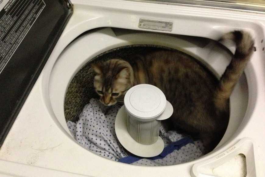 7 Must-Know Household Hazards for Cats-2