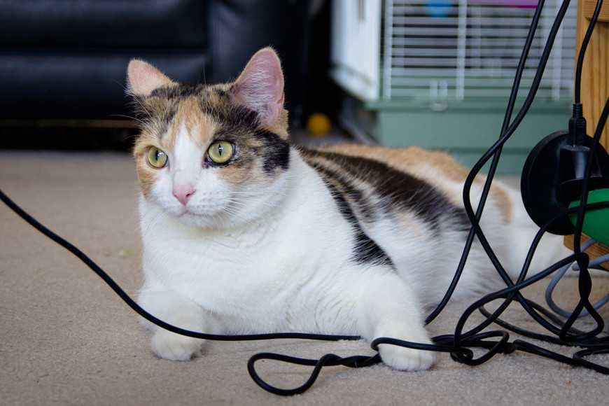 7 Must-Know Household Hazards for Cats-4