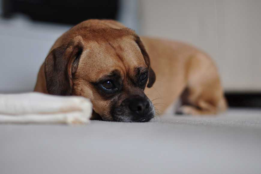 Dog Depression Treatment Options-1