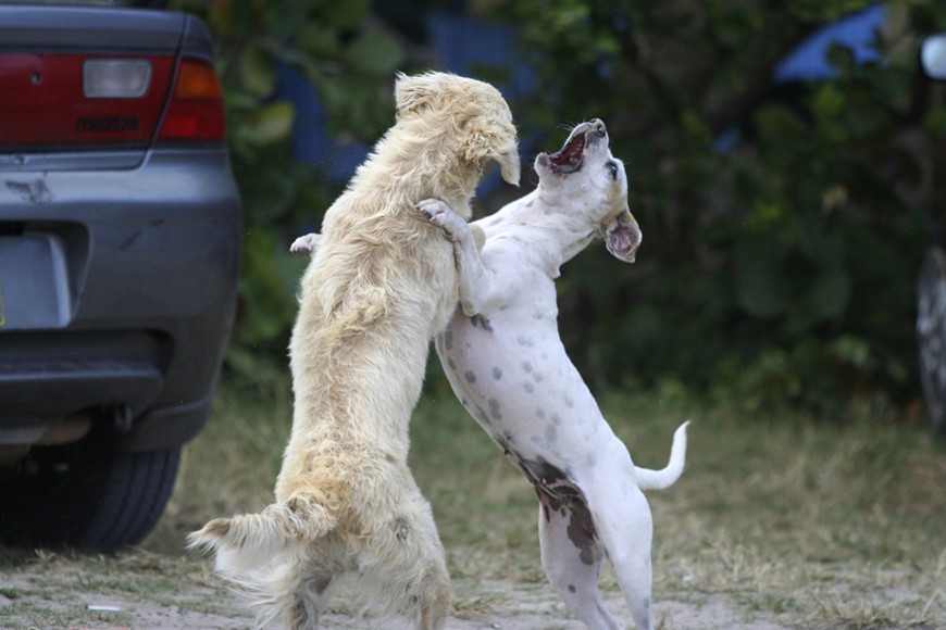 Some Common Triggers For Dog Aggression-4