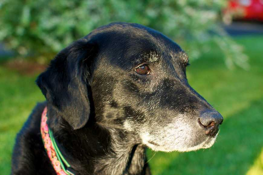 nutrients for old dogs-2
