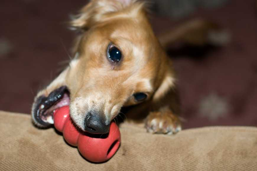 Buying a Food-Dispensing Dog Toy-2
